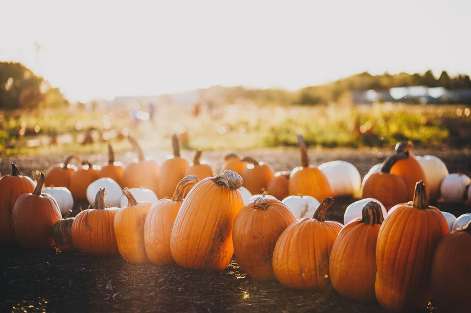 5 Fun Outdoor Activities To Do This Fall